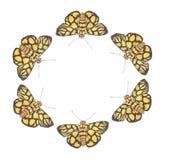 Farfalla che balla no.9 Immagini Stock Libere da Diritti