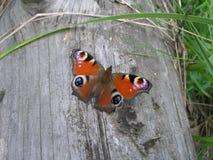 Farfalla che riposa su un ceppo Fotografie Stock