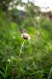 Farfalla che riposa sulla pianta Immagini Stock