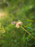 Farfalla che riposa sulla pianta Fotografia Stock Libera da Diritti