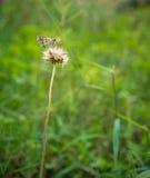 Farfalla che riposa sulla pianta Immagine Stock Libera da Diritti
