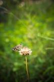 Farfalla che riposa sulla pianta Fotografie Stock Libere da Diritti