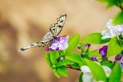 Farfalla che si alimenta sul fiore Fotografie Stock