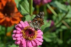 Farfalla che si siede su un fiore Fotografia Stock Libera da Diritti