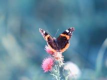 Farfalla che si siede sull'i fiori pungenti di estate su un meado soleggiato Fotografie Stock