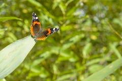 Farfalla che si siede sulla foglia contro un fondo vago dei verdi Fotografie Stock