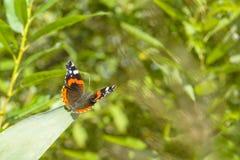 Farfalla che si siede sulla foglia contro un fondo vago dei verdi Immagine Stock Libera da Diritti
