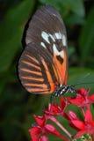 Farfalla chiave del piano Fotografia Stock