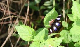 Farfalla colorata piacevole Fotografia Stock Libera da Diritti