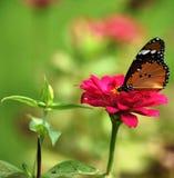 Farfalla Colourful Fotografia Stock Libera da Diritti
