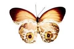 Farfalla con gli occhi immagini stock