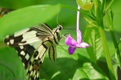 Farfalla con il fiore Immagini Stock