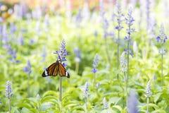 Farfalla con il fiore Immagine Stock Libera da Diritti