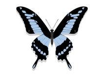Farfalla con le ali nere, modelli blu Fotografia Stock