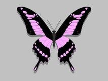 Farfalla con le ali nere, modelli rosa Fotografia Stock Libera da Diritti