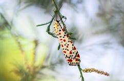 Farfalla con le ali piegate sul ramo Fotografie Stock Libere da Diritti
