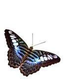 Farfalla con priorità bassa bianca Fotografie Stock Libere da Diritti