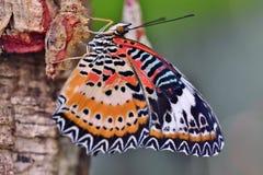 Farfalla del fiore immagine stock