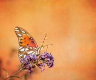 Farfalla del Fritillary del golfo (vanillae di Agraulis) Fotografia Stock Libera da Diritti