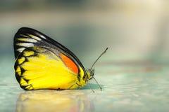Farfalla del primo piano sulla pietra Fotografia Stock