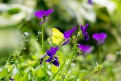 Farfalla del primo piano sulle foglie verdi Immagine Stock