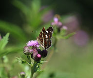 Farfalla del programma Fotografia Stock Libera da Diritti