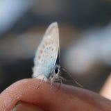 Farfalla del ritratto Fotografia Stock Libera da Diritti