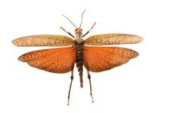 Farfalla deliziosa Fotografia Stock Libera da Diritti