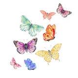 Farfalla dell'acquerello Fotografia Stock