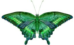 Farfalla dell'acquerello, isolata su bianco Immagini Stock