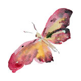 Farfalla dell'acquerello sull'illustrazione bianca del fondo Immagini Stock