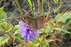 Farfalla dell'insetto sul fiore immagine stock