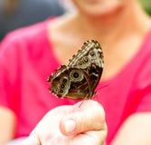 farfalla dell'insetto sulla mano delle donne, vaga Immagini Stock Libere da Diritti