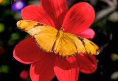 Farfalla della regina Fotografia Stock Libera da Diritti
