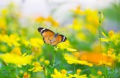 Farfalla della tigre Immagine Stock Libera da Diritti