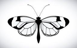 Farfalla Design Fotografia Stock Libera da Diritti