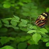 Farfalla dettagliata con fondo variopinto fotografie stock libere da diritti