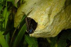 Farfalla dettagliata con fondo variopinto immagine stock