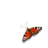 Farfalla di ammiraglio rosso - isolata su fondo bianco Fotografia Stock