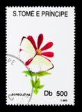 Farfalla di bianchi di giardino (PS del Pieris ), serie delle farfalle, circa 1 Fotografia Stock Libera da Diritti