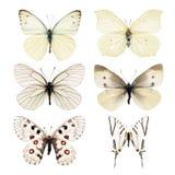Farfalla di bianco della raccolta Fotografia Stock