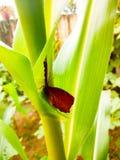 Farfalla di Brown sulla pianta Fotografia Stock Libera da Diritti
