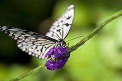 Farfalla di carta del cervo volante Fotografia Stock Libera da Diritti
