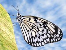 Farfalla di carta del cervo volante sul foglio Fotografia Stock Libera da Diritti