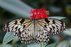 Farfalla di carta dell'aquilone Fotografia Stock