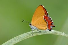 Farfalla di colore fotografia stock libera da diritti