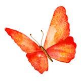 Farfalla di estate Illustrazione dell'acquerello Fotografia Stock Libera da Diritti
