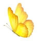 Farfalla di estate Illustrazione dell'acquerello Fotografie Stock Libere da Diritti