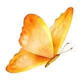 Farfalla di estate Illustrazione dell'acquerello Immagini Stock