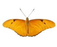 Farfalla di Julia su bianco Immagini Stock Libere da Diritti